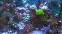premier aquarium business malaga - 1