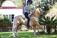 equestrian estate for sale - 1